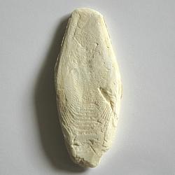 Sépiová kost 12 cm 1 ks